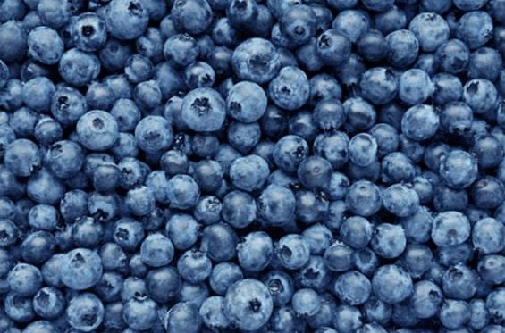 Bundle of Blueberries
